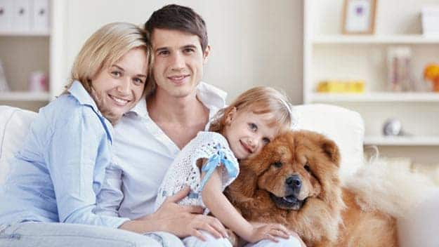 Wills & Trusts dog-young-family Direct Wills Daventry